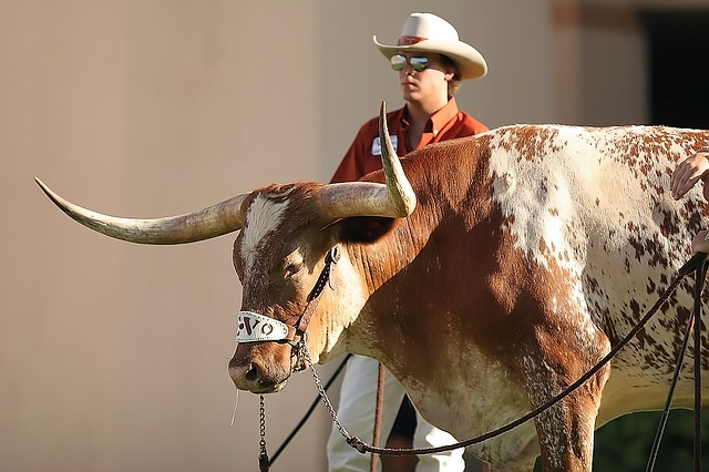 Cowboy at rodeo. Austin, TX bariatric surgery seminar with Mexico Bariatric Center, 2014.