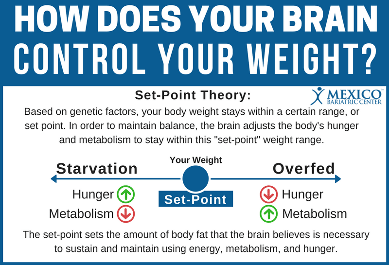 How Does Your Brain Control Your Weight