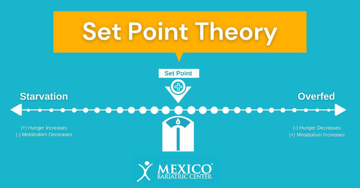Set Point Theory - Hunger Increases Metabolism Decreases