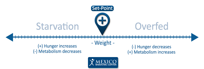 Set Point Theory - Metabolism and Hunger Chart