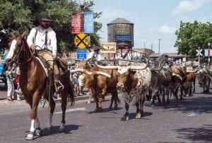 Cowboys Cattle Longhorns - Mexico Bariatric Center - Arlington, Texas Bariatric Surgery Seminar