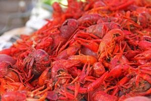 Crawfish - Mexico Bariatric Center - Louisiana Bariatric Surgery Seminar