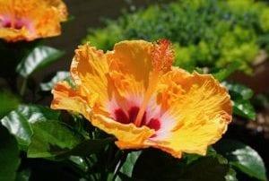 Flower in Baton Rouge - Mexico Bariatric Center - Louisiana Bariatric Surgery Seminar