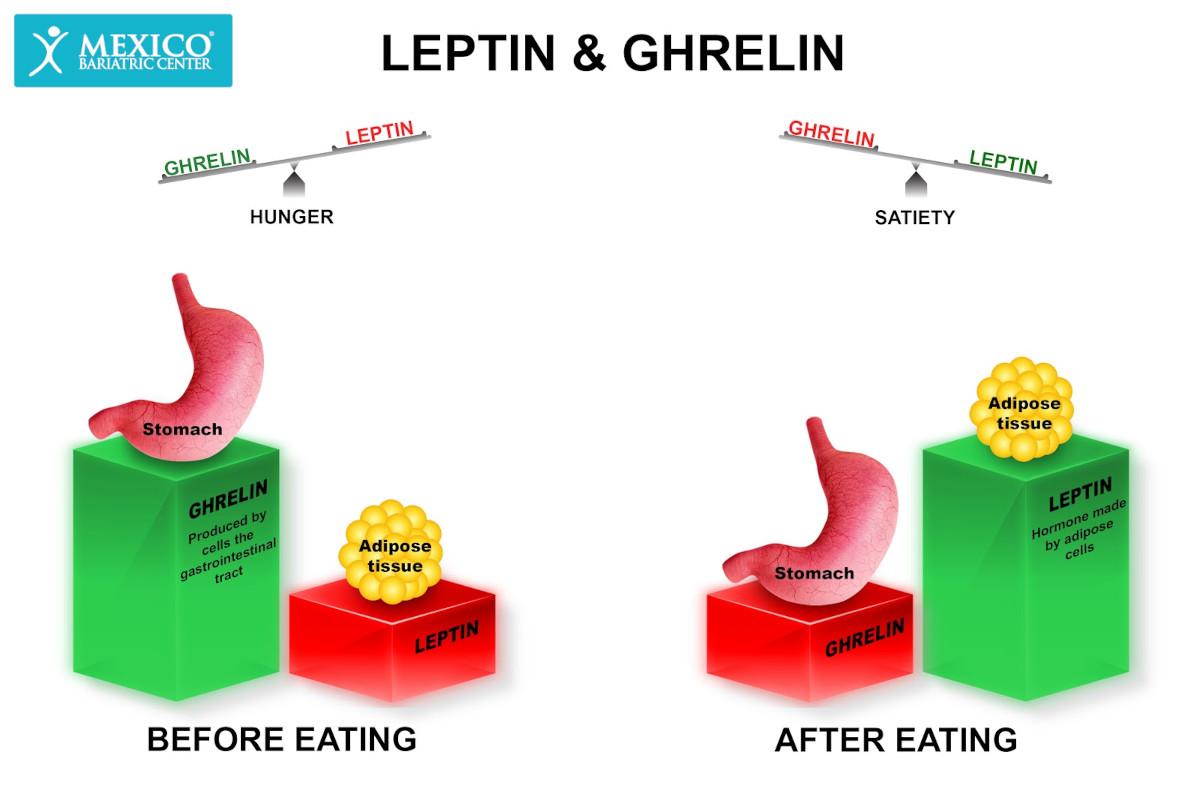 Gut Hormones Ghrelin and Leptin