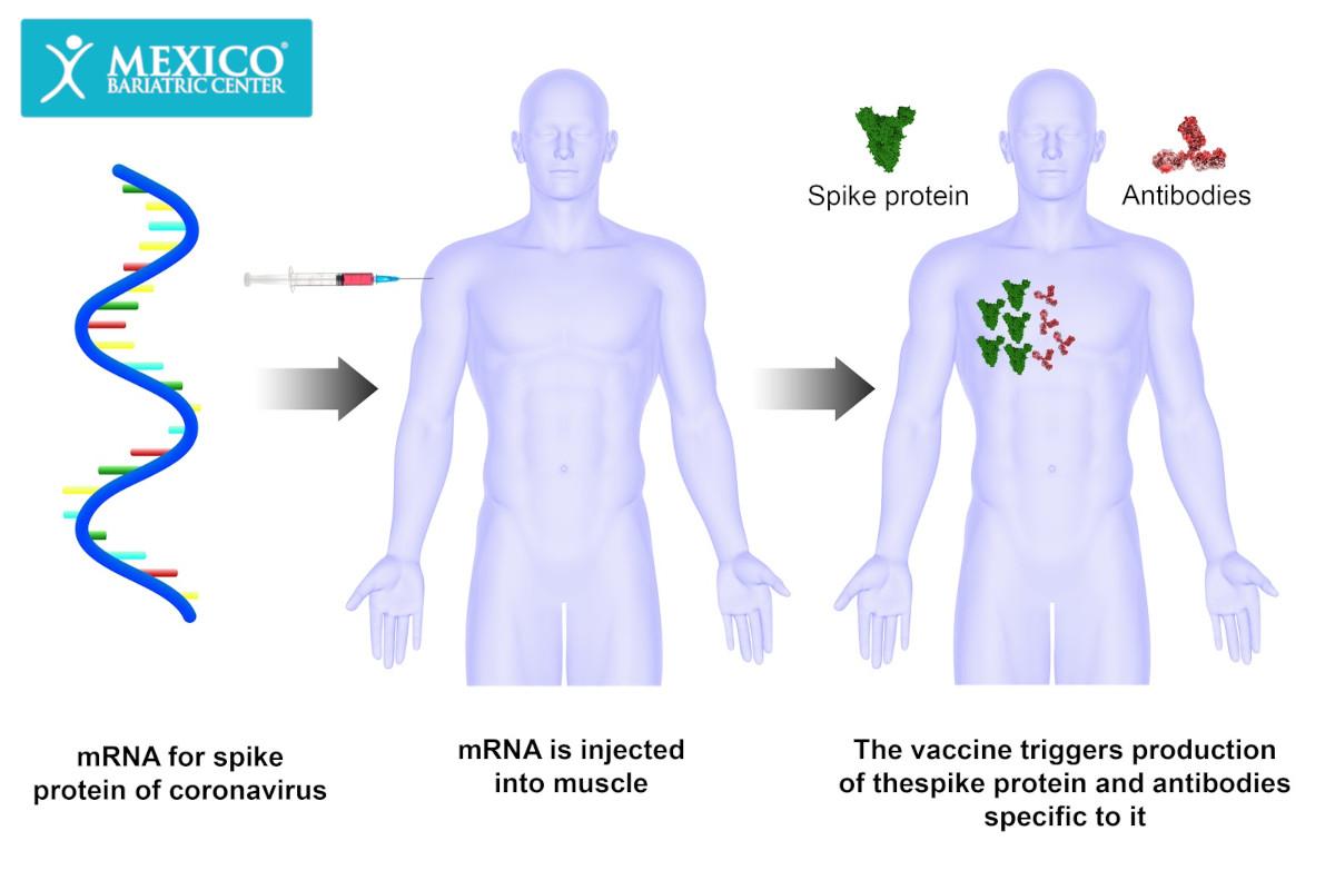 How Coronavirus Vaccine Works - mRNA COVID-19 vaccine