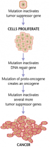 Cancers are caused by a series of mutations. Each mutation alters the behavior of the cell somewhat (Wikipedia) https://en.wikipedia.org/wiki/Cancer