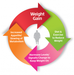 obesity and the set point theory essay Set-point theory • according to the set-point theory • according to the set-point theory, the set point itself keeps weight fairly constant, presumably.